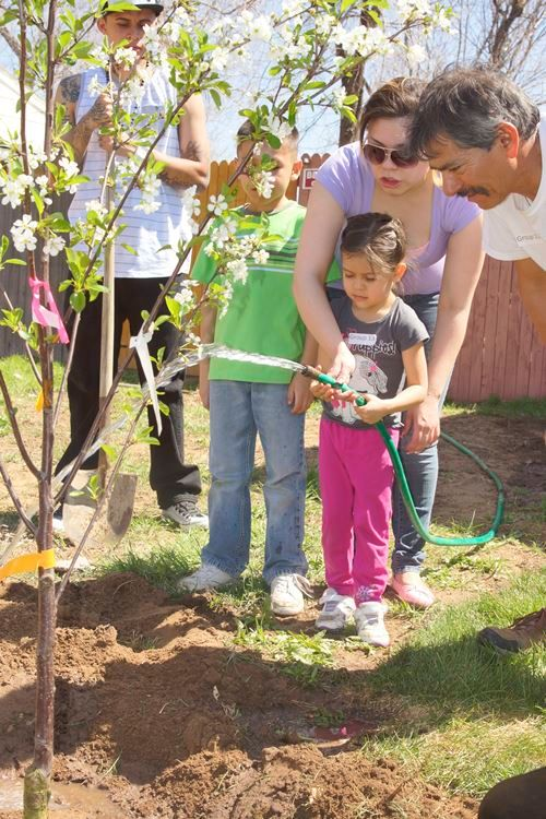 Planting fruit trees in Commerce City