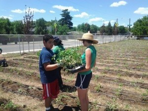 Planting peppers at Kepner Middle School's garden.