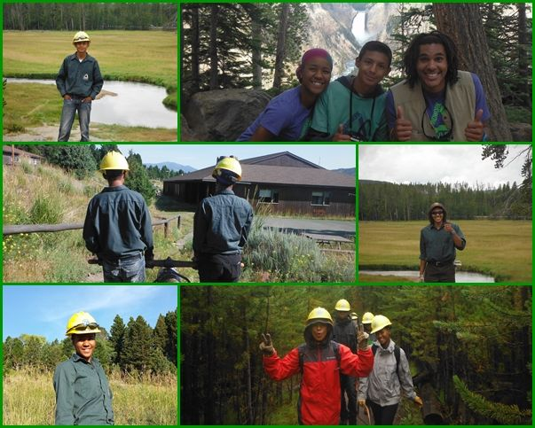 yellowstone collage